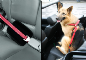Patento City Leash With Car Adapter